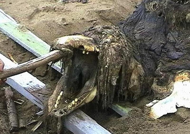 俄罗斯现神秘动物尸骸 特种部队带回研究【3】