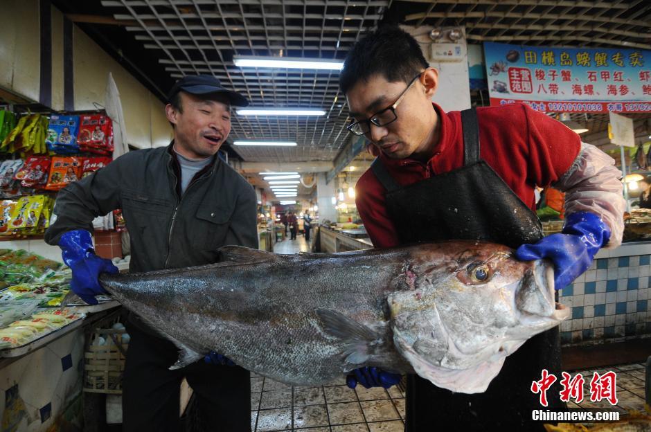 """渔民渤海湾捕获重100余斤巨型""""怪鱼"""""""