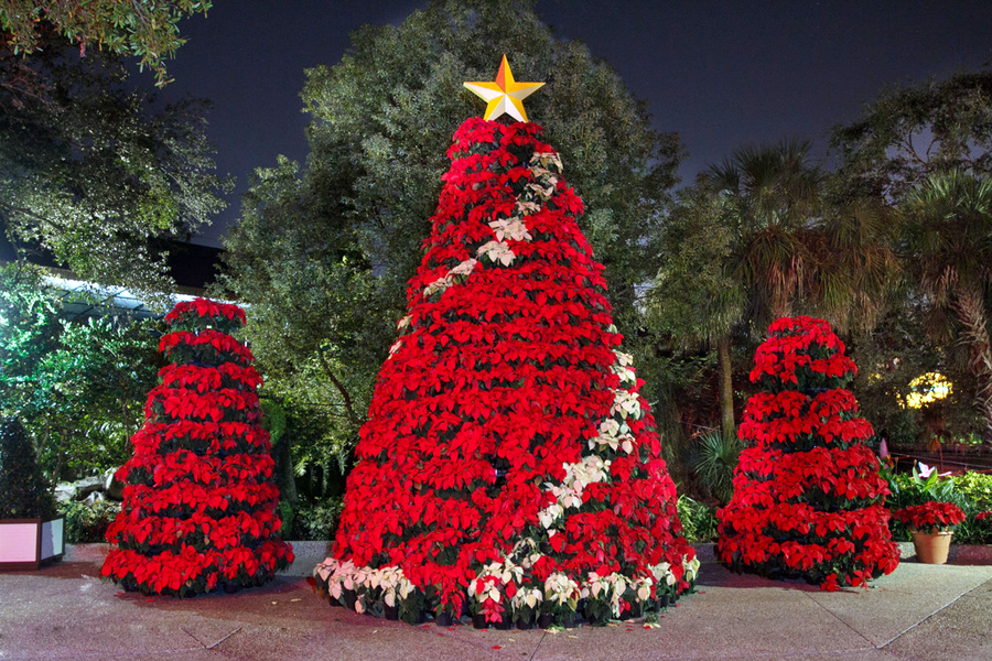 Most Beautiful Christmas Trees Around World People S Daily Online