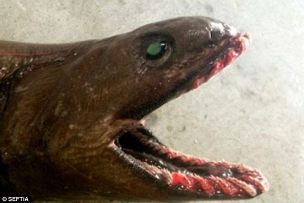 300多颗尖牙利齿:这怪鱼都不像是地球的