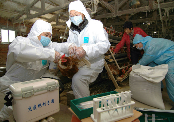 Possibility of H7N9 mass outbreak small, expert says