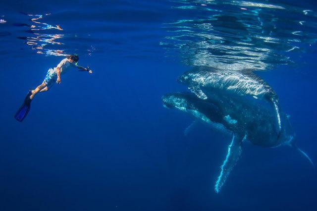 摄影师带3名孩子与40吨鲸鱼同游【5】