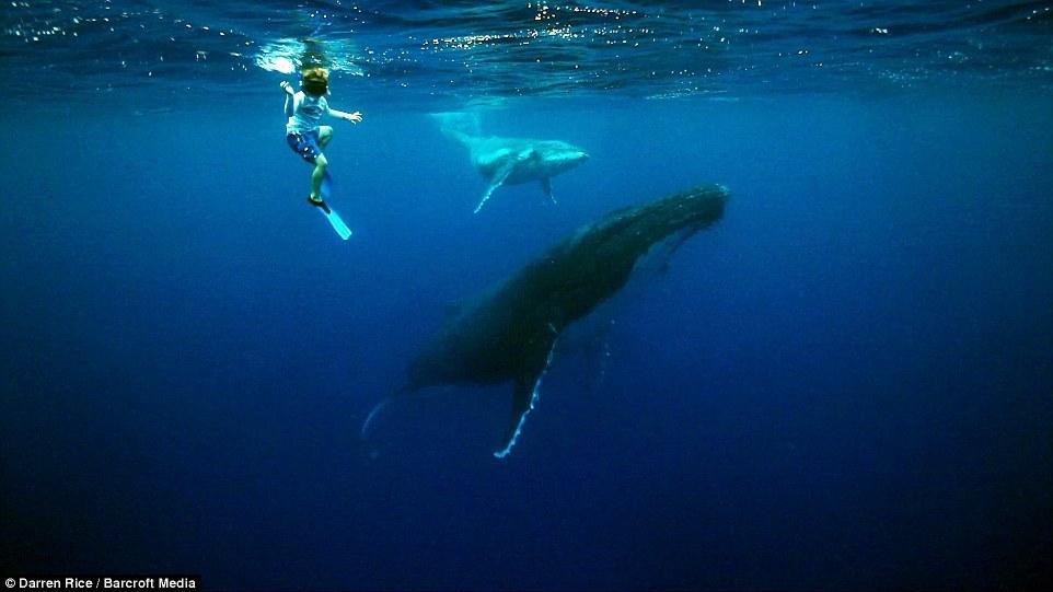 摄影师带3名孩子与40吨鲸鱼同游【4】