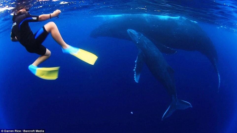 摄影师带3名孩子与40吨鲸鱼同游【6】