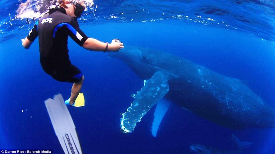 摄影师带3名孩子与40吨鲸鱼同游