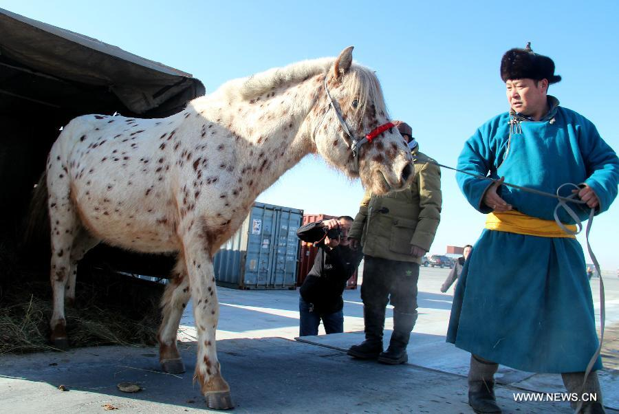 Two horses from Mongolia arrived in China on Thursday, as gifts delivered by Mongolian Presisent Tsakhiagiin Elbegdorj to Chinese President Xi Jinping and his wife Peng Liyuan during their state visit in Mongolia on Aug. 21 - 22 last year. Xi also gave names to them.