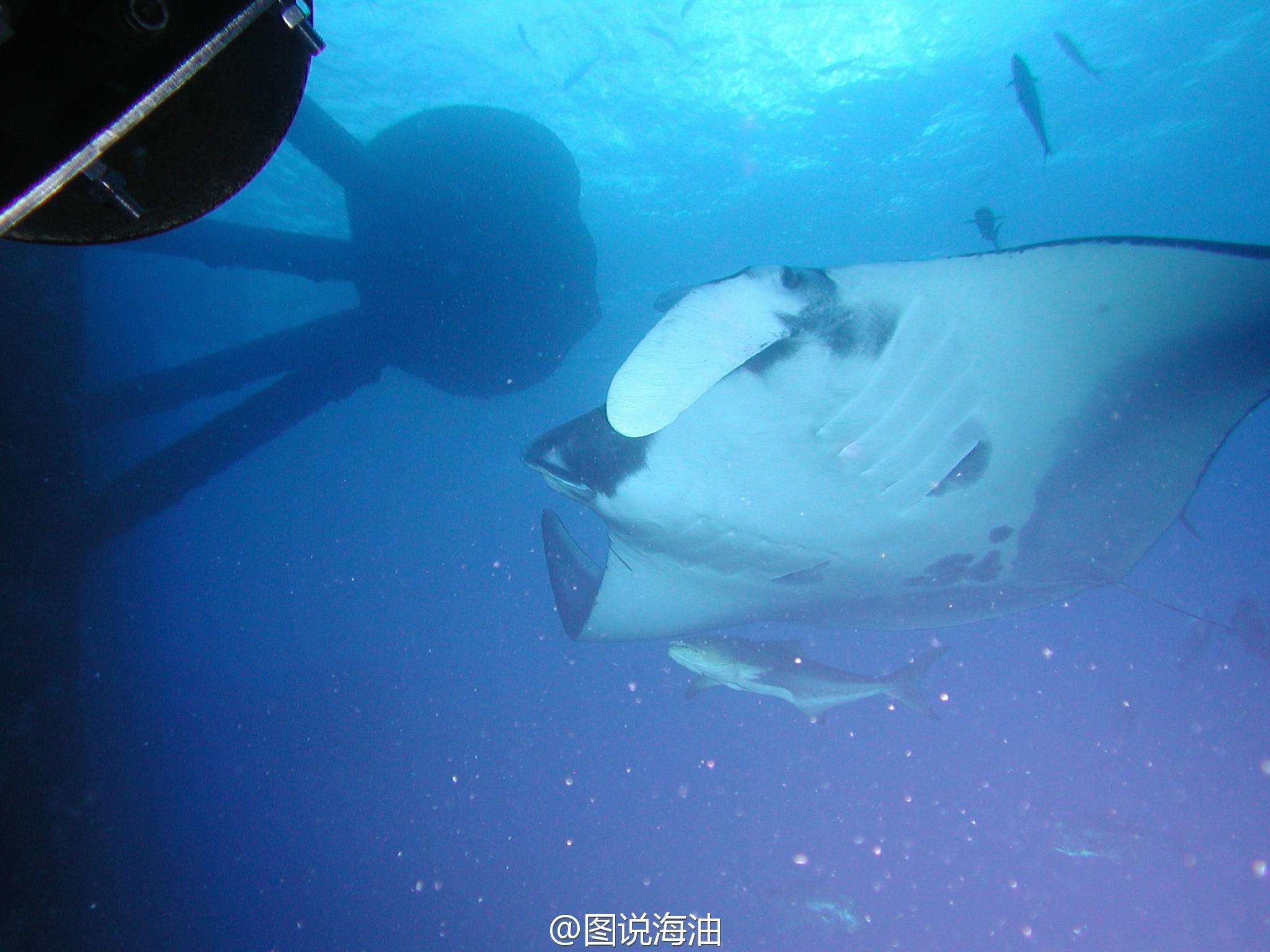 南海3000米海底插国旗!中国水下机器人真容曝光【5】