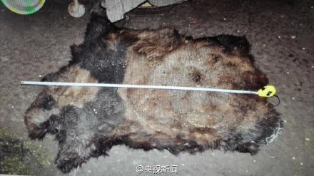 查获的熊猫皮。