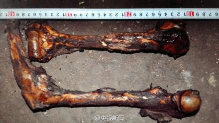 查获的熊猫的骨骼。