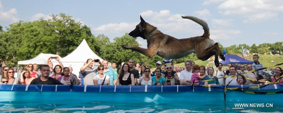 HUNGARY-BUDAPEST-DOG DIVING-COMPETITION