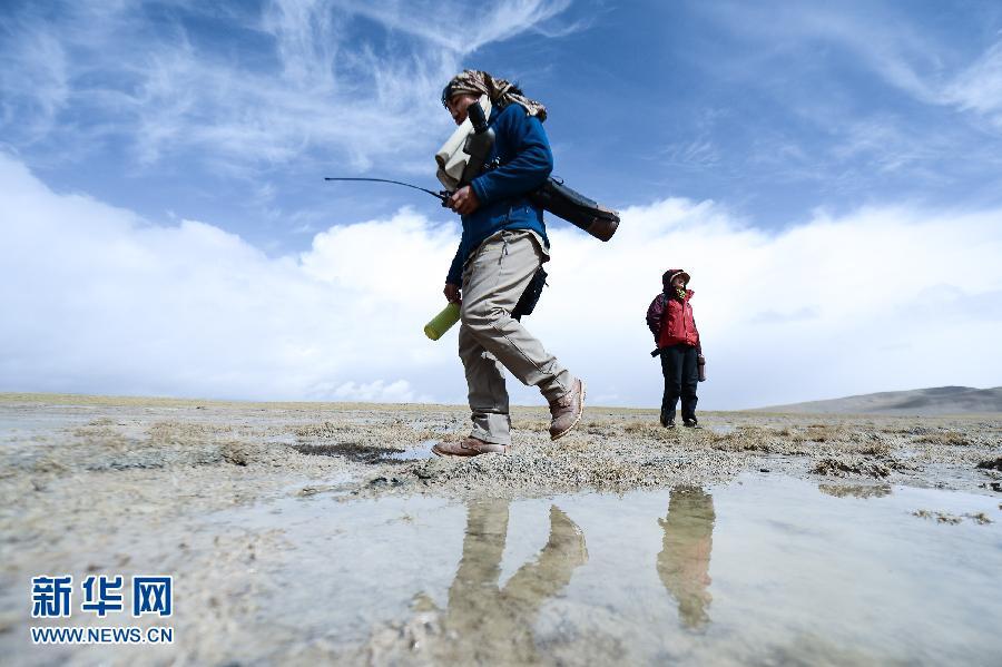 (世界环境日)(1)长江源头的斑头雁守护者