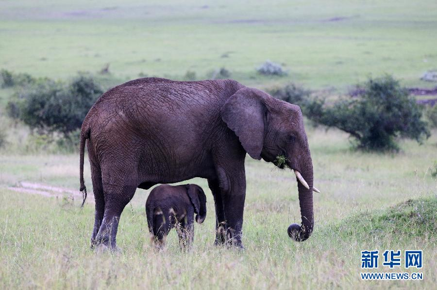 (XHDW)(1)大迁徙前的东非草原