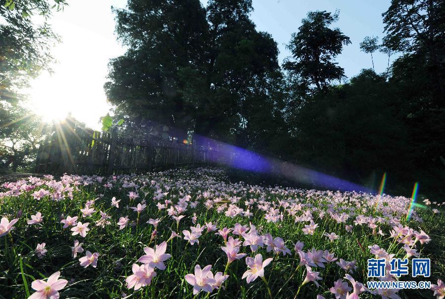 (XHDW)(3)云南普洱:绿水青山 美丽生态
