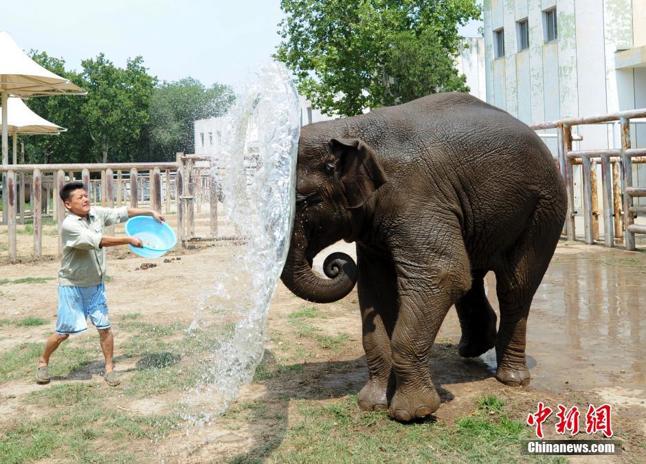 """济南迎高温 动物园给老虎大象""""泼冷水"""""""