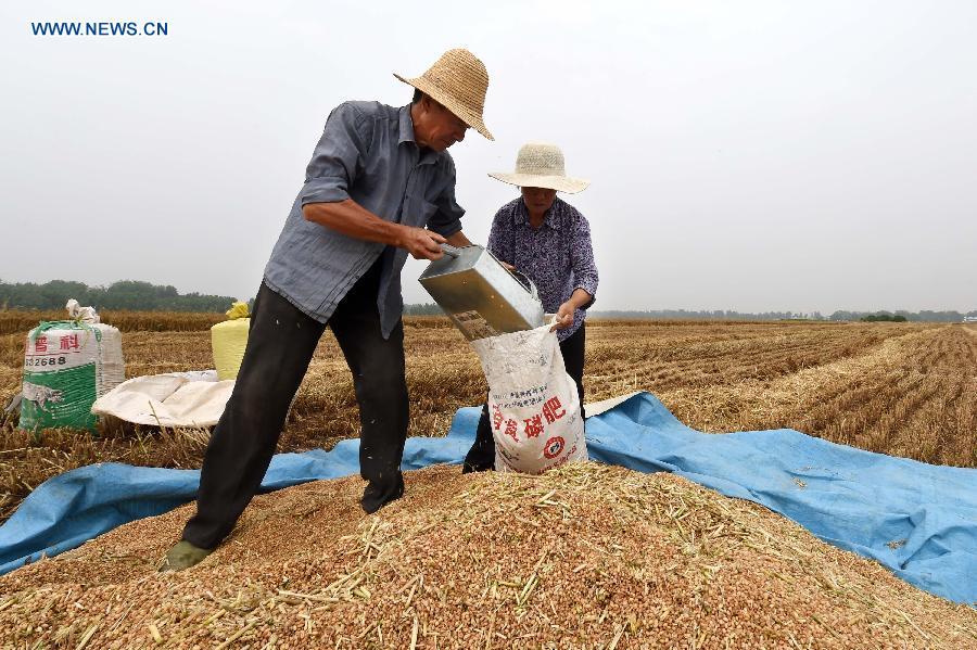 CHINA-HENAN-SUMMER CROPS YIELD-GROWTH (CN)