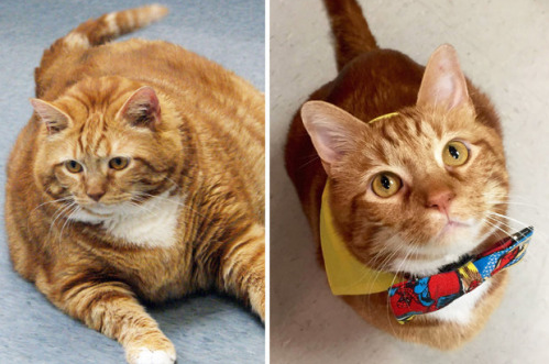 Former 41-pound fat cat in Texas slims down to 19 pounds in three years