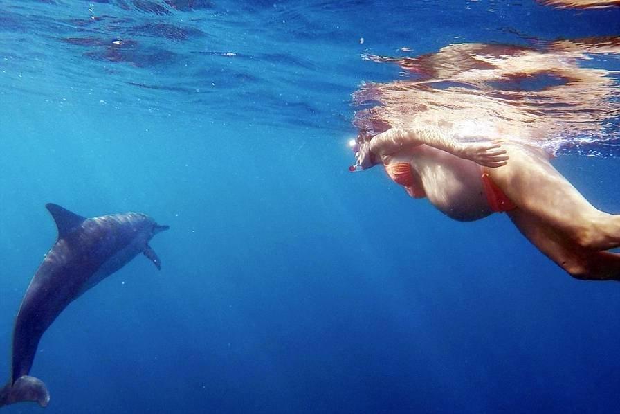 """夏威夷女子将在大海中生产 海豚当""""接生婆"""""""