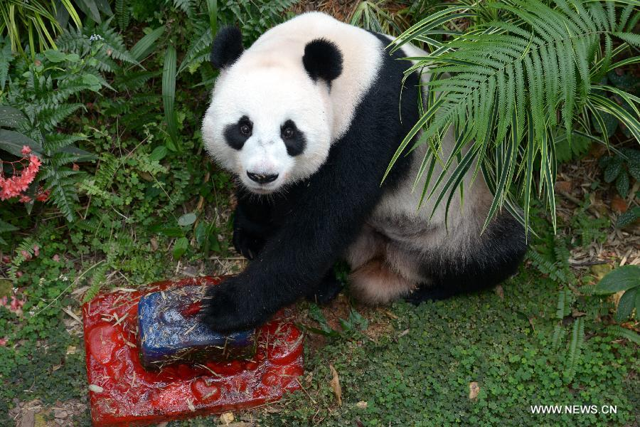 Giant Pandas Kai Kai Jia Jia Celebrate Birthdays In Singapore
