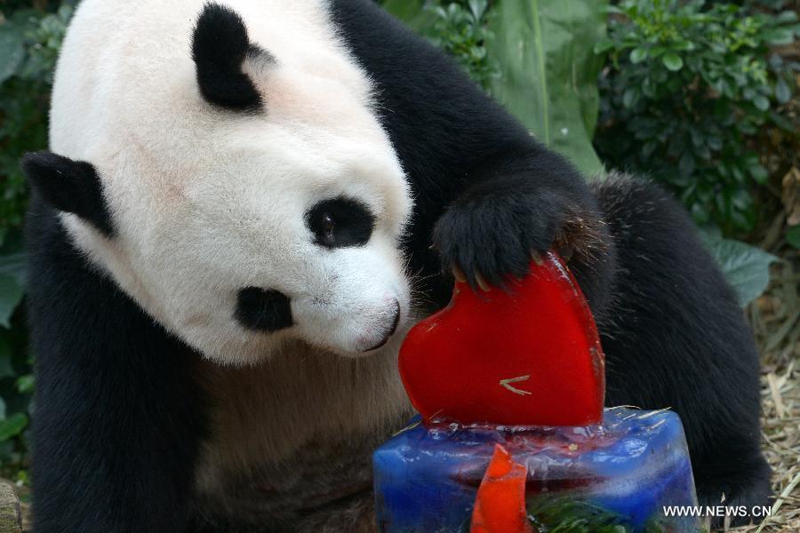 Giant Pandas Kai Kai Jia Jia Celebrate Birthdays In Singapore 2