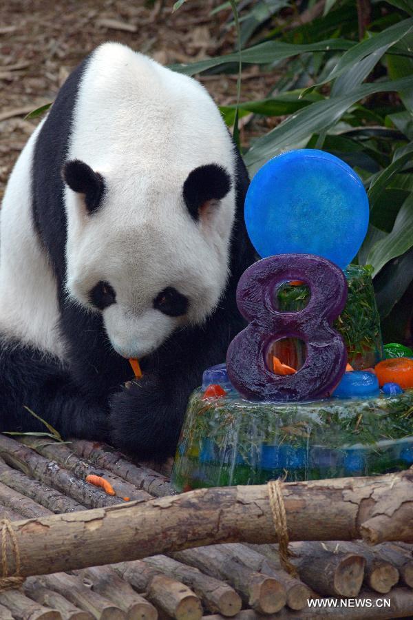 Giant Pandas Kai Kai Jia Jia Celebrate Birthdays In Singapore 3