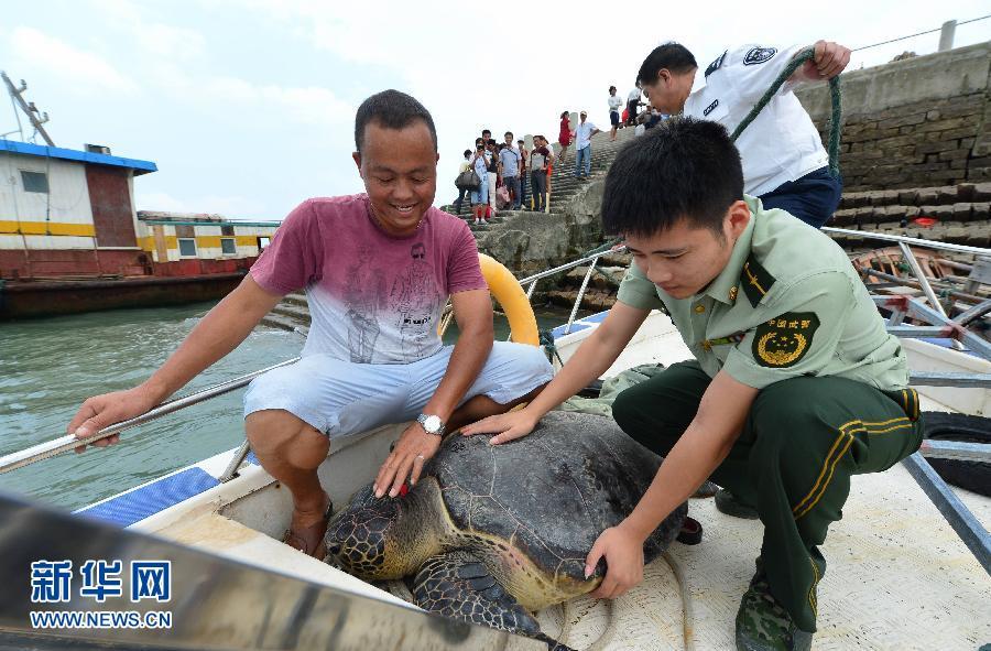 (生态)(1)放归濒危绿海龟