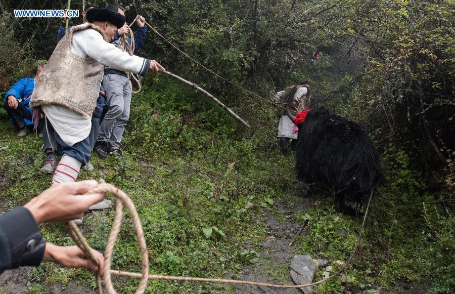 People of Qiang ethnic group release a yak during an event to worship the god 'Baihaha' in Xishan Village of Lixian County, southwest China's Sichuan Province, Sept. 20, 2015.