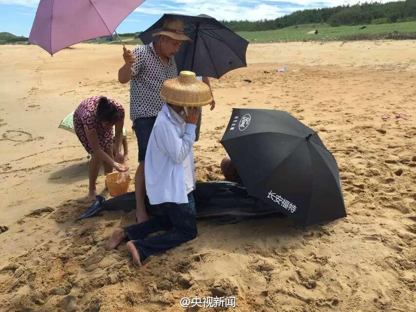 海豚在海南海边搁浅 村民撑伞浇水实施救助