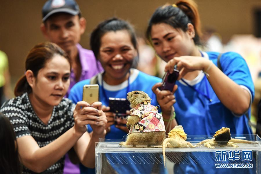 (国际)(1)泰国曼谷上演多彩宠物秀