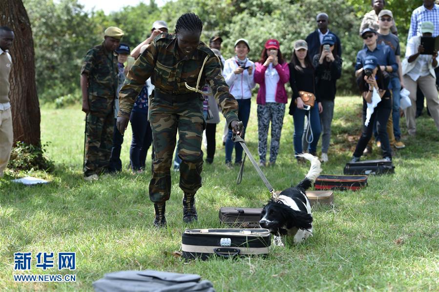 """(国际)(1)肯尼亚野生动植物的""""监护人"""""""