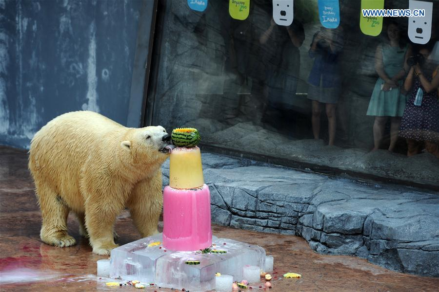 1st polar bear born in tropics turns 25 in Singapore (2