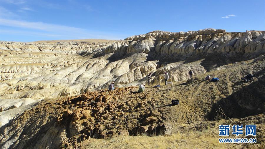 (晚报)(3)西藏阿里发现400多万年前鬣狗化石