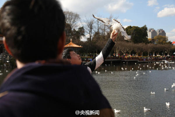 昆明游客喂食时抓鸥双脚 身旁女子趁机拍照(图)