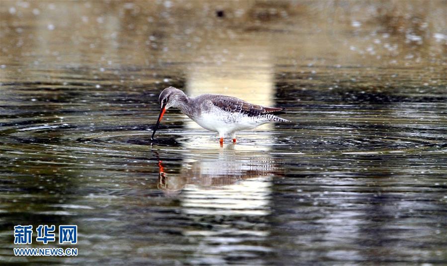 (生态)(1)我国进行首次全国冬季水鸟同步调查