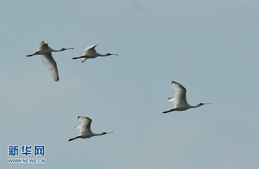 (生态)(2)我国进行首次全国冬季水鸟同步调查