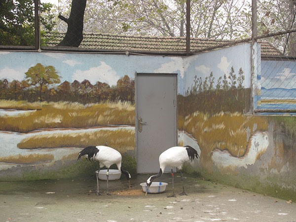 Paintings on habitat walls appeal to zoo visitors