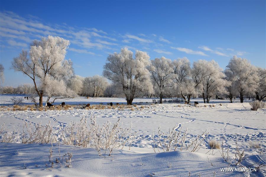 Photo taken on Jan. 11, 2016 shows rime scenery beside Kiran River, Altay, northwest China's Xinjiang Uygur Autonomous Region.