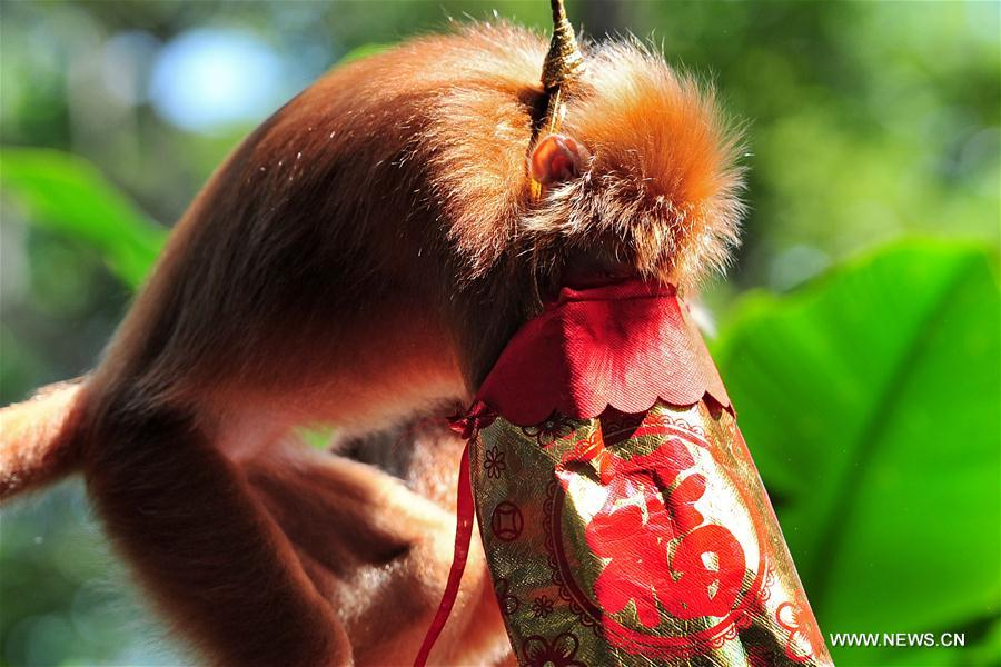 SINGAPORE-ZOO-NEW YEAR CELEBRATION-LUCKY BAGS FOR MONKEYS