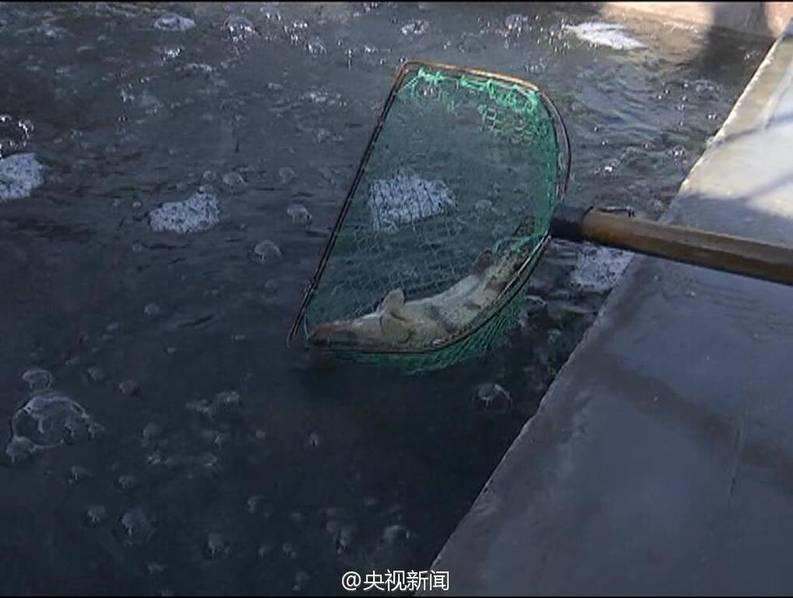 """偷9条鱼被敲诈4万元 小偷报警""""求助""""【3】"""