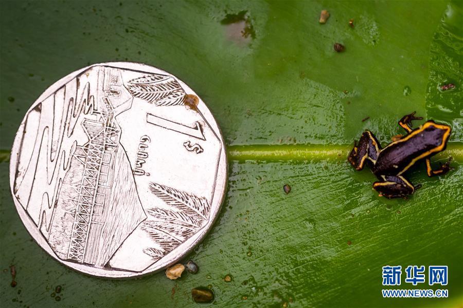 (国际)(2)古巴珍稀山蛙