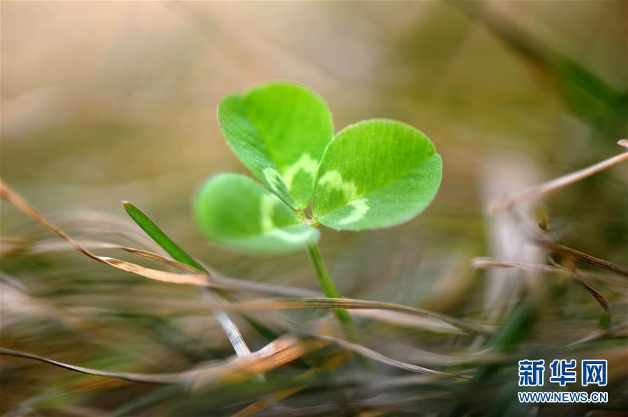 #(生态)(1)春回大地