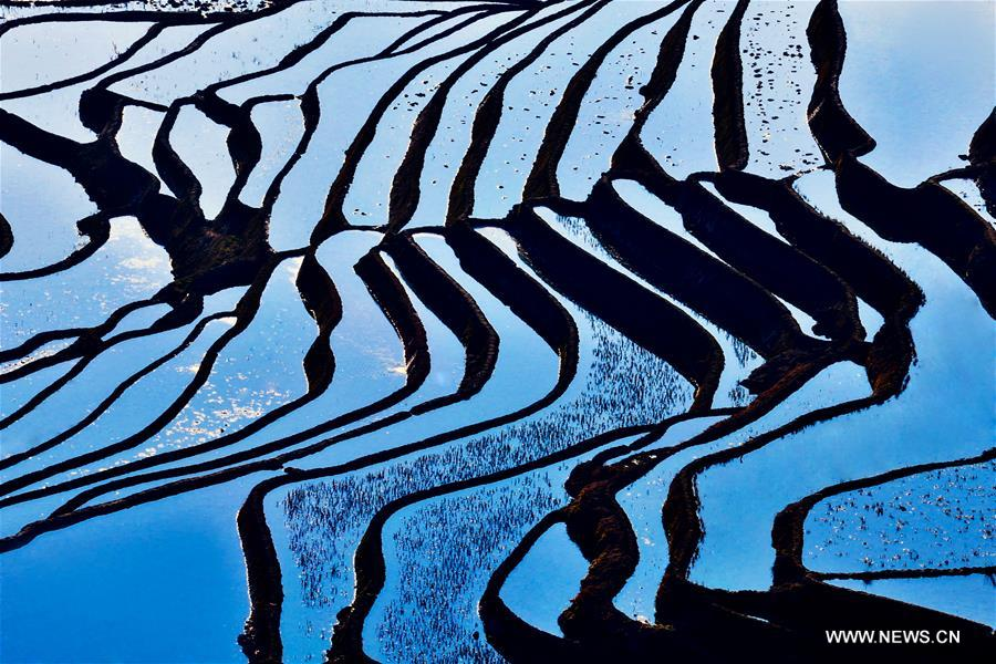 Yuanyang rice terraces are the 45th World Heritage Site in China