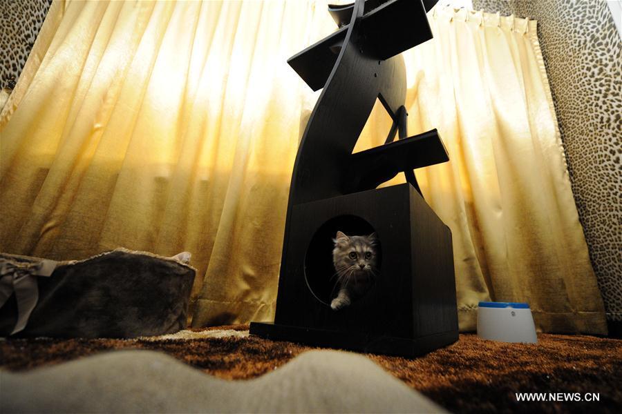 SINGAPORE-CAT SUITE-LUXURY HOTEL