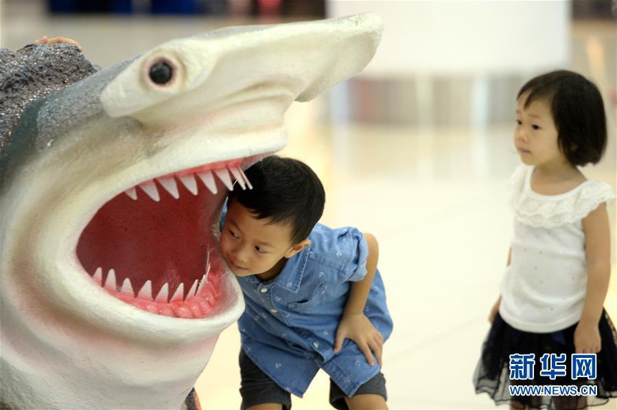 """(国际)(1)马来西亚沙巴州举行""""鲨不能无翅""""活动"""