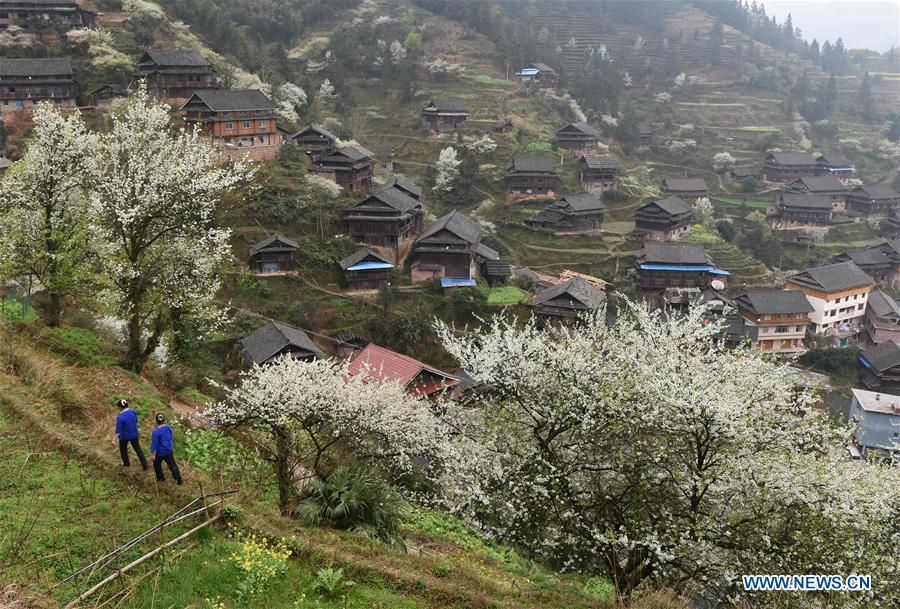 Girls of Dong ethnic group walk in a village, which is decorated by plum blossoms, in Tangshui Village of Bajiang Township in Sanjiang Dong Autonomous County, south China's Guangxi Zhuang Autonomous Region, March 8, 2016.