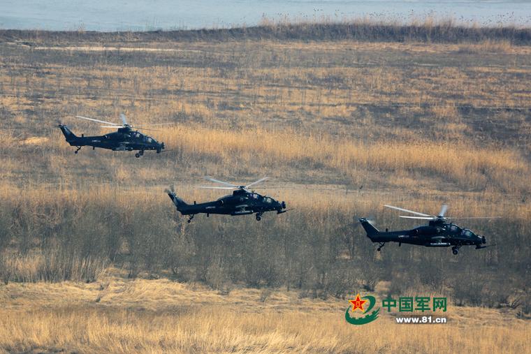 陆军某部超低空训练 武直-10飞于树梢之上【2】