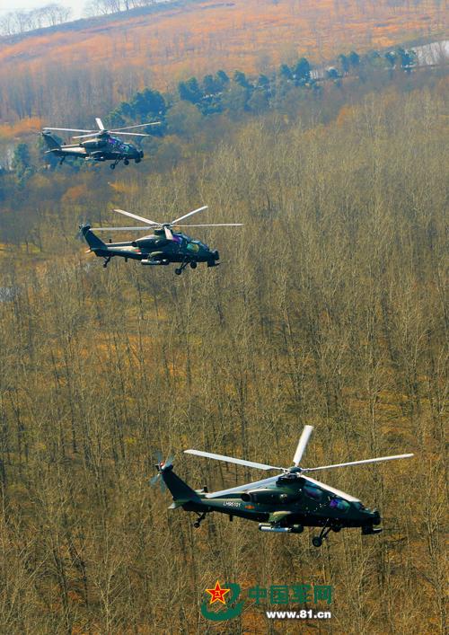 陆军某部超低空训练 武直-10飞于树梢之上