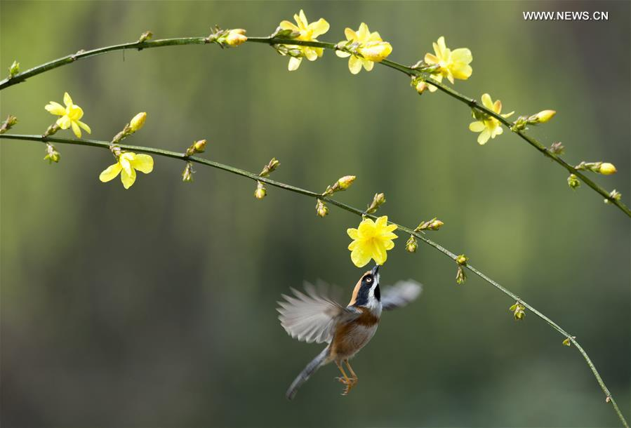 #CHINA-JIANGSU-WUXI-BIRD-SPRING (CN)