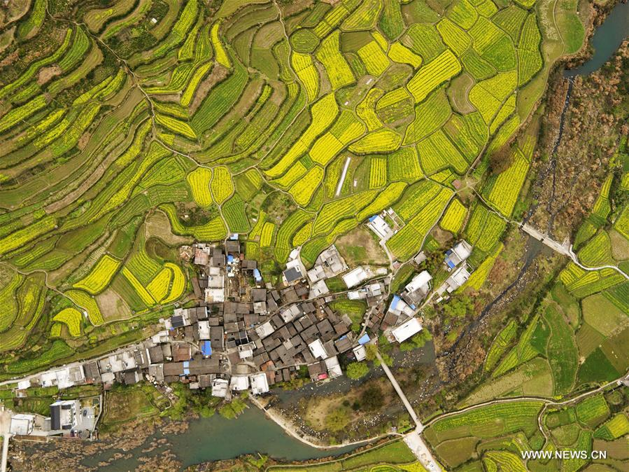 Aerial photo taken on March 17, 2016 shows rape blossoms in the fields in Wuyuan County, east China's Jiangxi Province