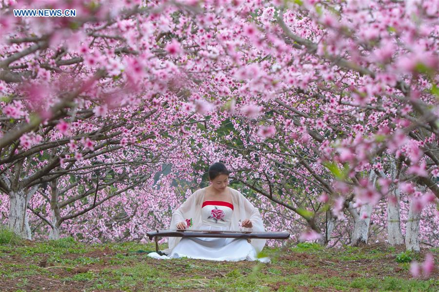 #CHINA-SICHUAN-PEACH BLOSSOM(CN)