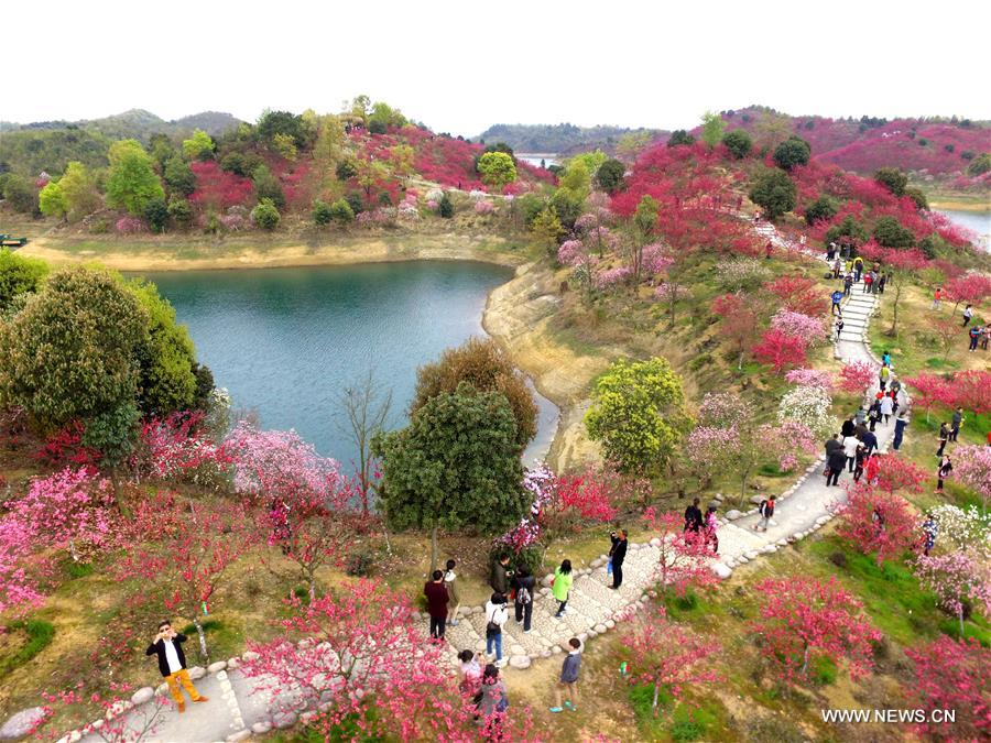 Flowers are in full bloom at Xihai Huayuan Valley scenic spot on the Lunshan Mountain in Wuning County, east China's Jiangxi Province, March 26, 2016